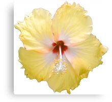 Yellow Hibiscus Flower Canvas Print