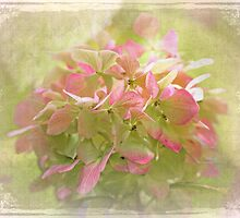 Pink Hydrangea by MotherNature2