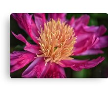 Pink And Yellow Peony Canvas Print