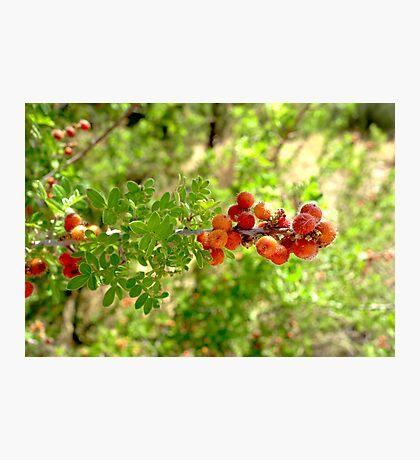 Desert Orange  Photographic Print