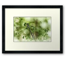 A tiny one hidden in the green by the pond Framed Print