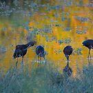 Ibis Impressionism by Sue  Cullumber