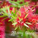 Merry Christmas - Bottlebrush by Kell Rowe