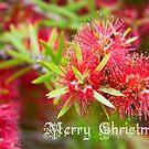 Merry Christmas - Bottlebrush by Kell Rowe