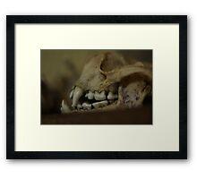Animal Skull Framed Print