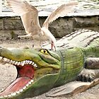 Gull attacking crocodile by Steve
