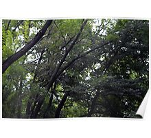 Forest background with many trees tops with green leaves. Poster