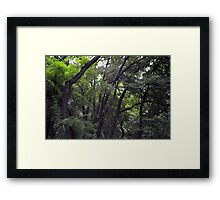 Forest background with many trees tops with green leaves. Framed Print