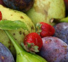 Harvest Organic Vegetables Sticker