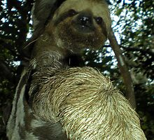 The Sloth by Nicklas Gustafsson