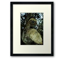 The Sloth Framed Print