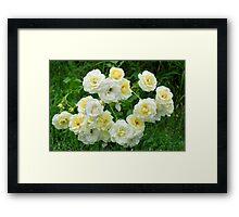 White roses in the garden. Framed Print