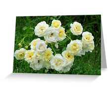 White roses in the garden. Greeting Card