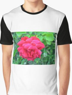 Pink rose and green leaves, natural background. Graphic T-Shirt