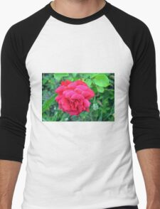 Pink rose and green leaves, natural background. Men's Baseball ¾ T-Shirt
