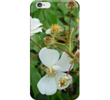 Small white delicate flowers and green leaves. iPhone Case/Skin