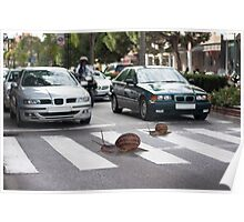Always use the zebra crossing Poster