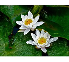 Water Lily (3) Photographic Print