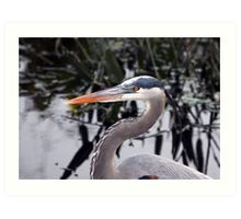 Great blue Heron - Portrait Art Print