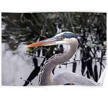 Great blue Heron - Portrait Poster