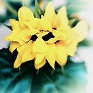 Smiling Sunflower by Kasia-D