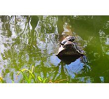 Turtles on a log Photographic Print