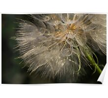 Going to Seed Poster