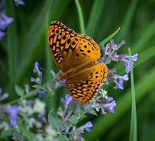 Great Spangled Fritillary by Lynn Gedeon