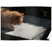 Ginger cat hunting a fly Poster