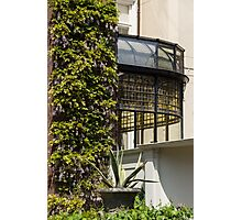 Gardening Delights - Wisteria, Aloe Vera and a Stained Glass Canopy - Right Photographic Print