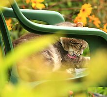 Grey cat grooming in garden with yellow flowers by turniptowers
