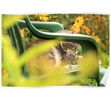 Grey cat grooming in garden with yellow flowers Poster