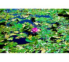 Water Lilly and Pads  Photographic Print