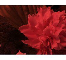 Mint Bouquet Red Photographic Print