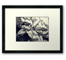 Mint Peony Framed Print