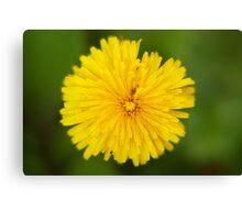 Dandelion, Photography, Macro, Nature,Home decor, Fine art, Spring, Canvas Print