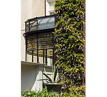 Gardening Delights - Wisteria Aloe Vera And A Stained Glass Canopy - Left Photographic Print