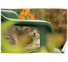 Grey cat in garden with yellow flowers Poster