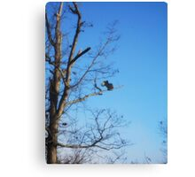 Vultures in Dead Tree Canvas Print