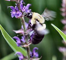 Busy Bumble Bee by Keala