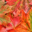The Colours of Autumn by Michael Matthews