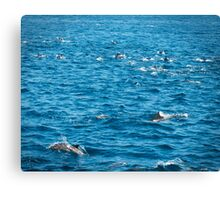 Dolphins, Ocean photography, Nature, Seascape,  Canvas Print