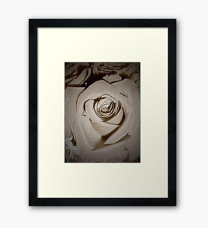 Vanilla Roses Framed Print