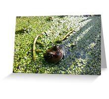 Garden Visitor Greeting Card