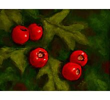 Hawthorn Berries in Oil Pastel, Red and Green, Christmas Photographic Print