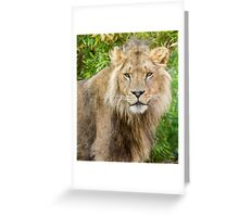 530 lion king Greeting Card