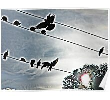 black birds on a wire Poster