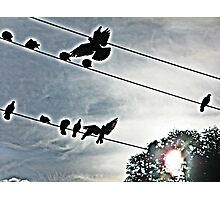 black birds on a wire Photographic Print