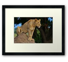 Perch with a view Framed Print