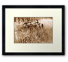 Antique Plow Overgrown in a Field Framed Print